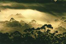 """Sunrise over the Nimbin valley""  by Thorsten Jones / WhiteAntStudios"